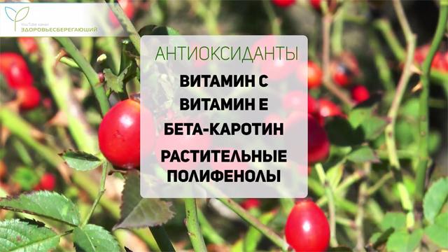 Антиоксиданты в шиповнике